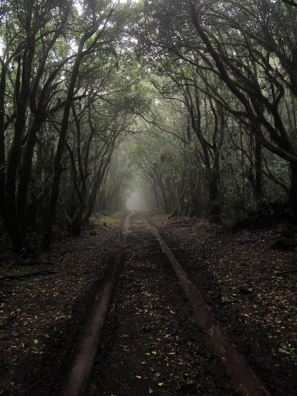camino entre árboles durante el día