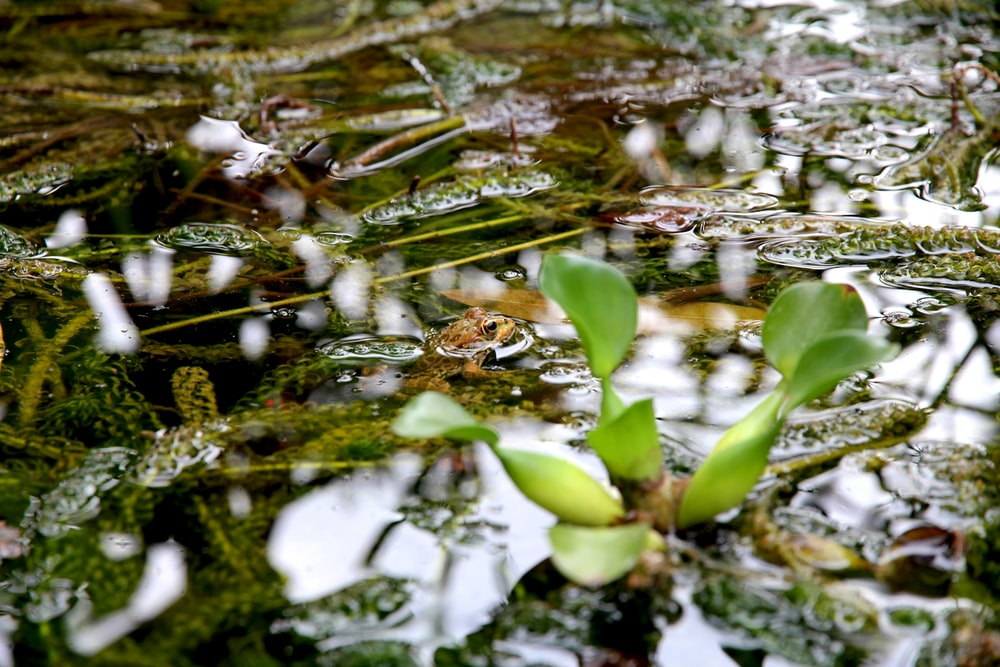 selective focus photography of green leafed plant on body of water