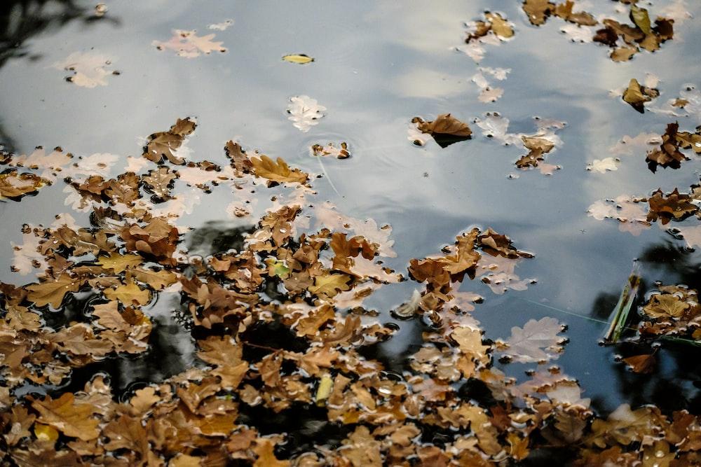 brown dry leaves on body of water