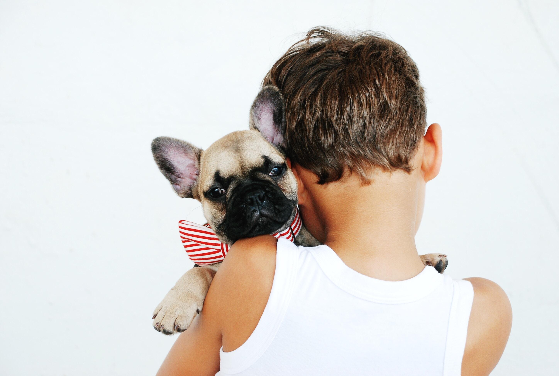 boy hugging fawn pug puppy