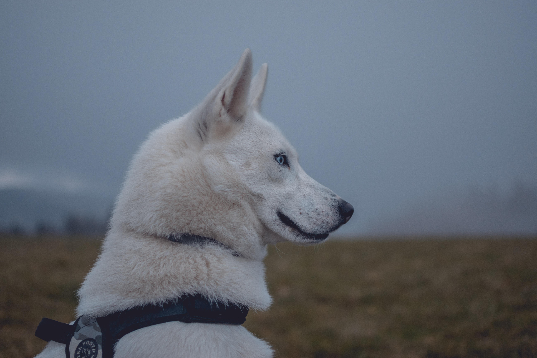 macro photography of white dog