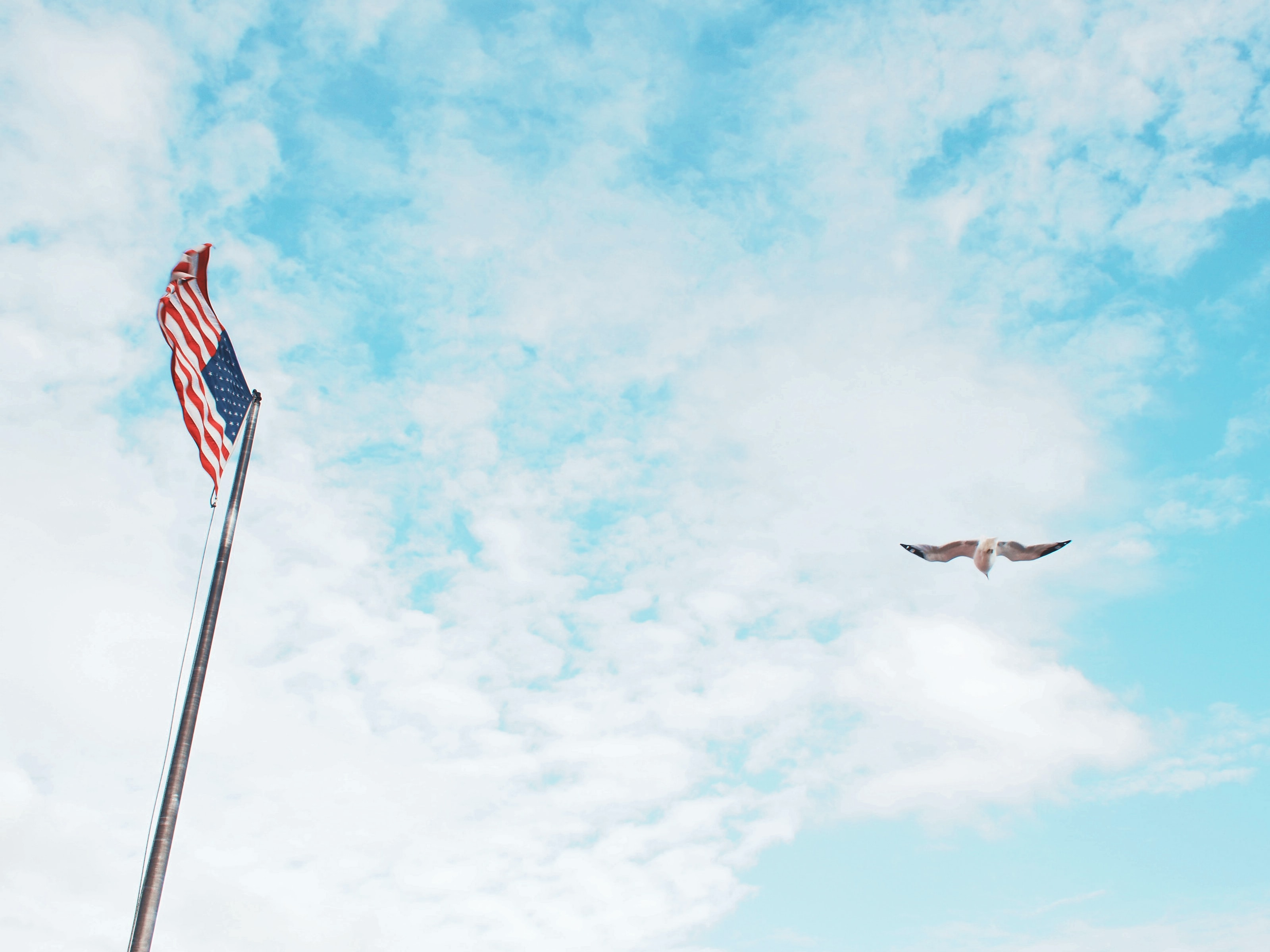 bird flying near American flag under white clouds during daytime