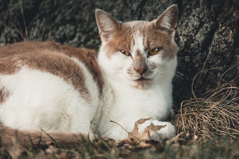 brown and white cat lying on ground
