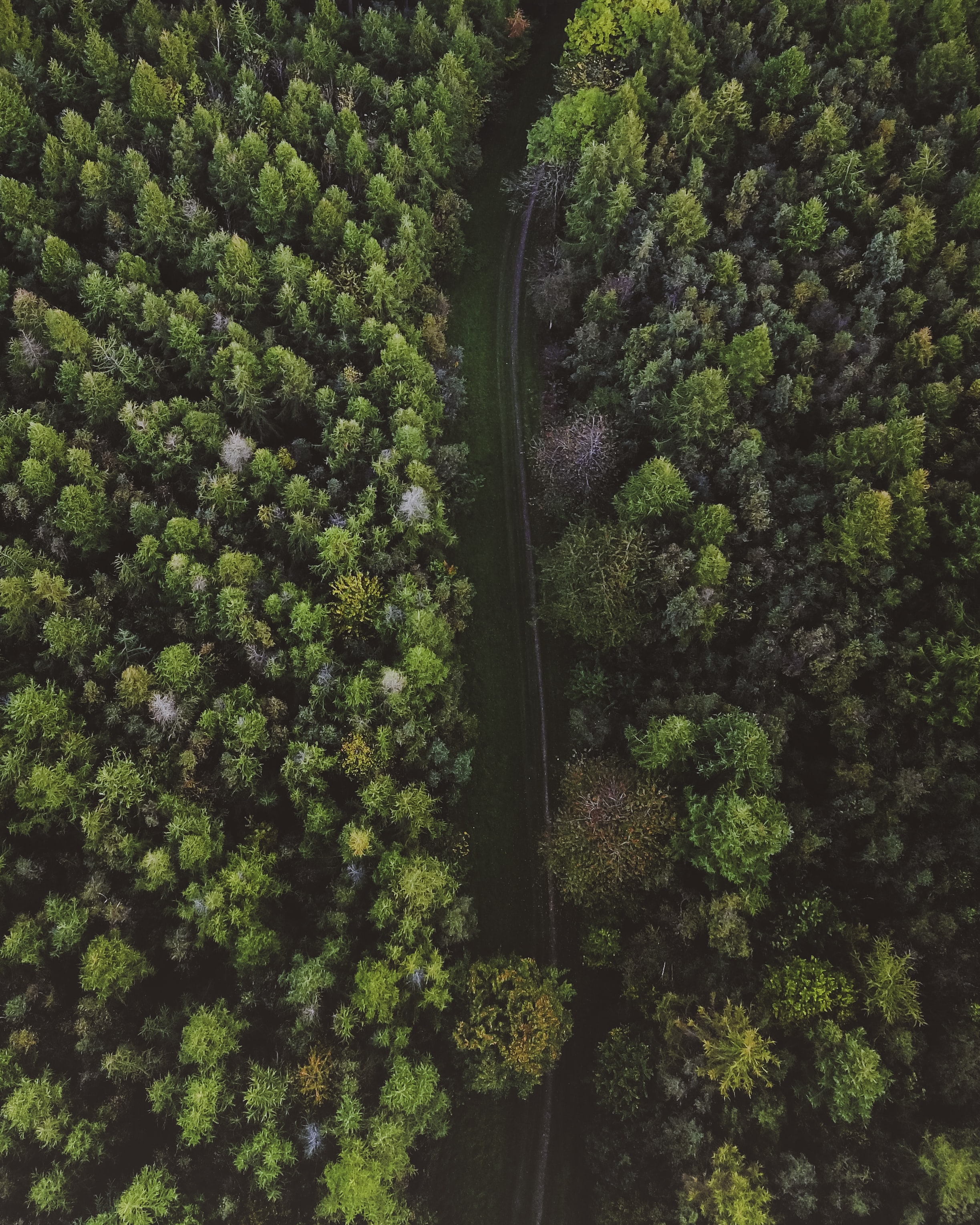 aerial view of river surrounded green trees field