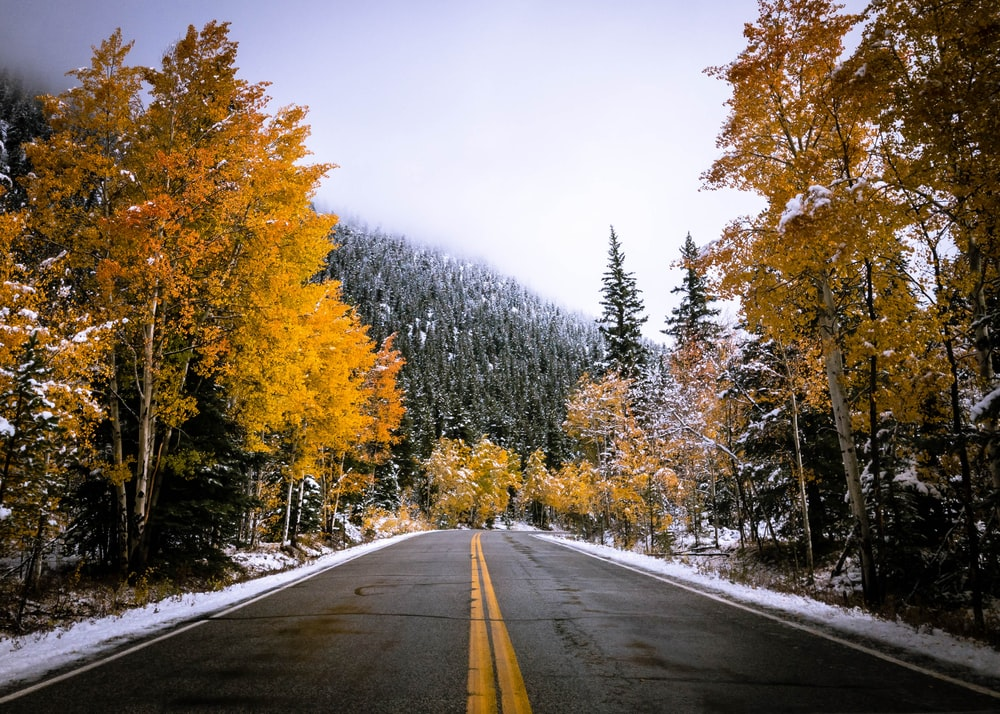 gray road surrounded by yellow leafed trees