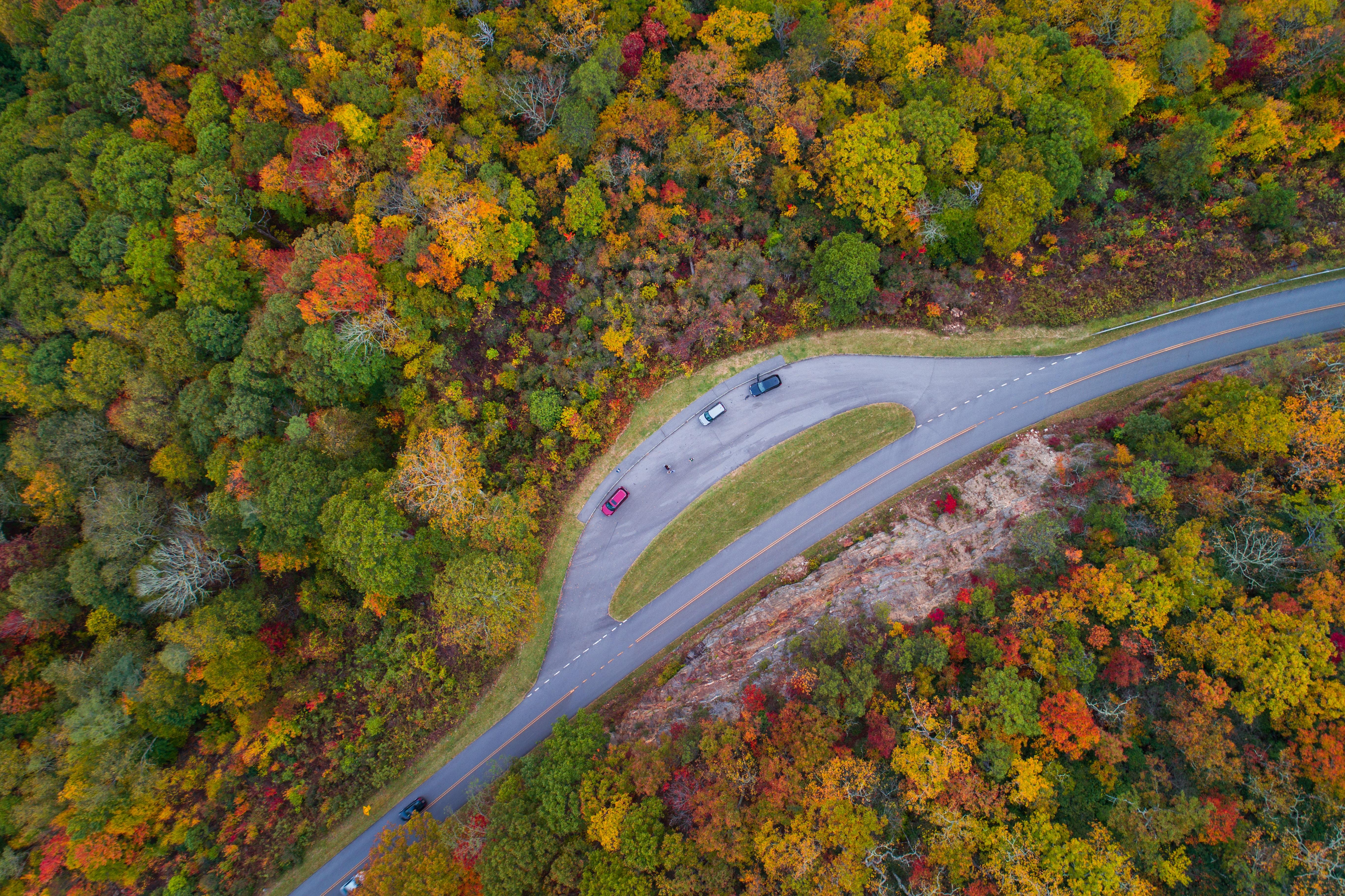 bird's-eye view of roadway between trees