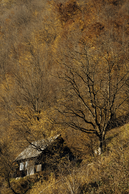 cabin near tall trees