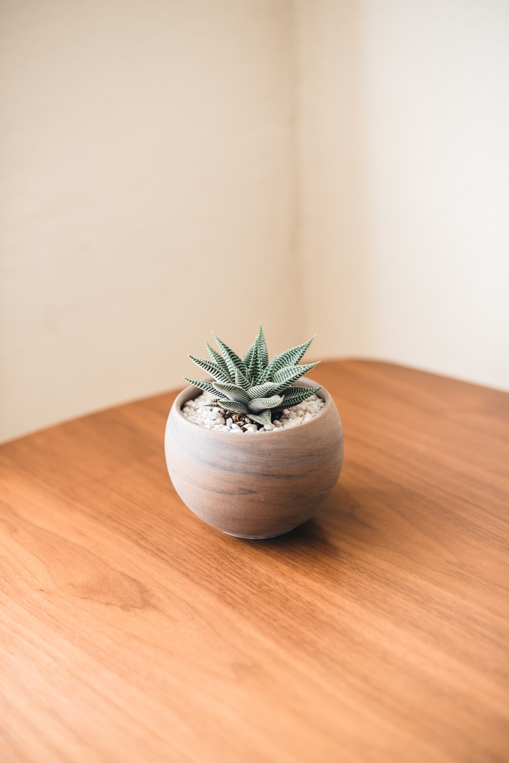 potted green plant inside room