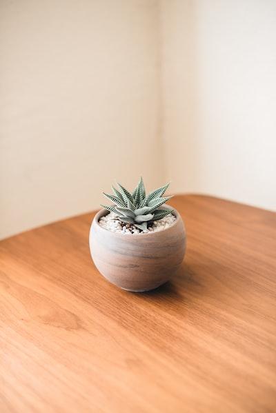 Lone Succulent