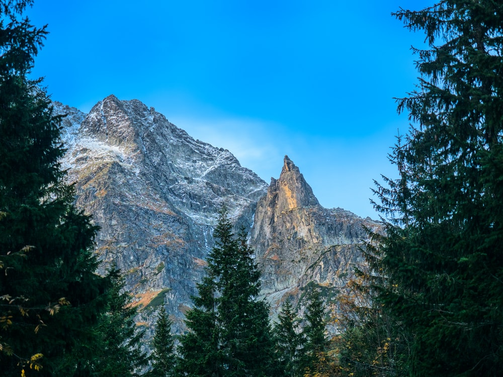 photo of mountain with trees in vicinity