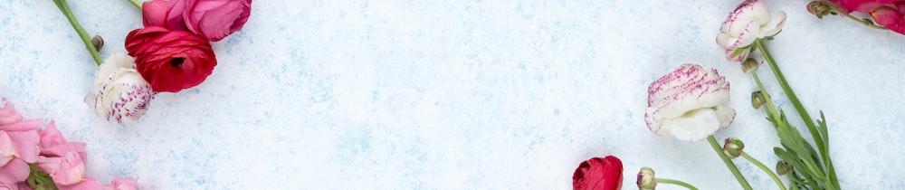 Pangolin header image