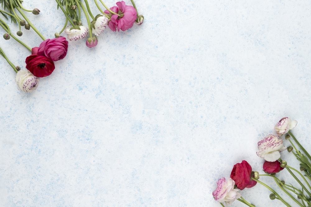 pink and white flowers on white surface