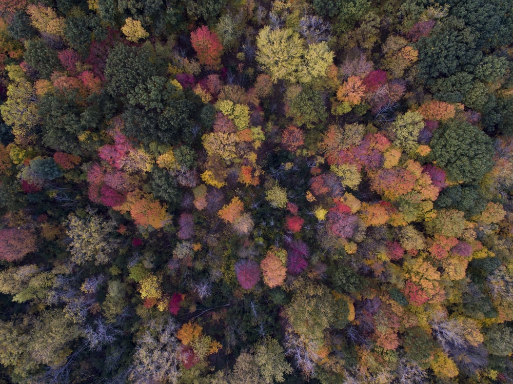 bird's eye view photo of green leafed trees