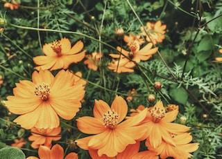 photo of fully bloomed orange petaled flower plant