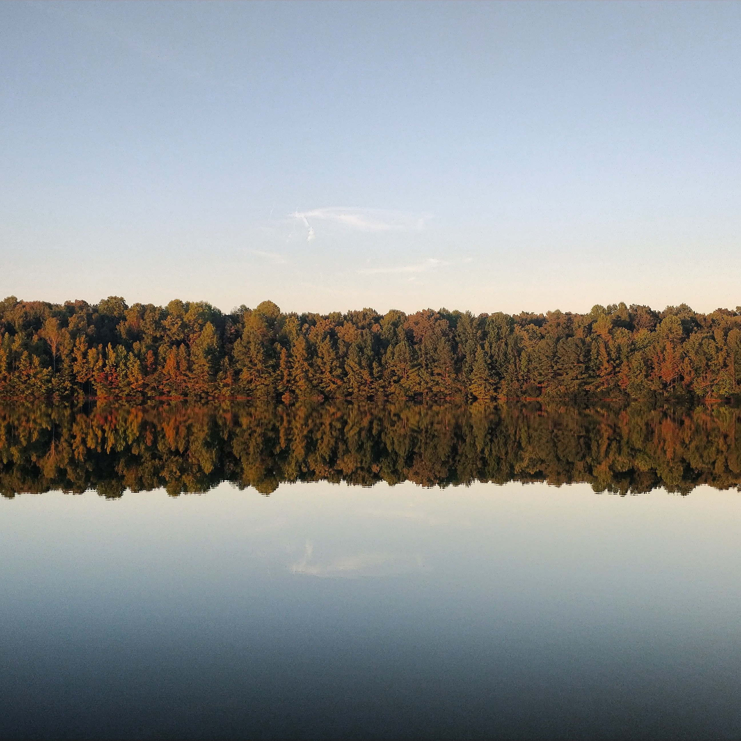photo of trees and body of water during daytime