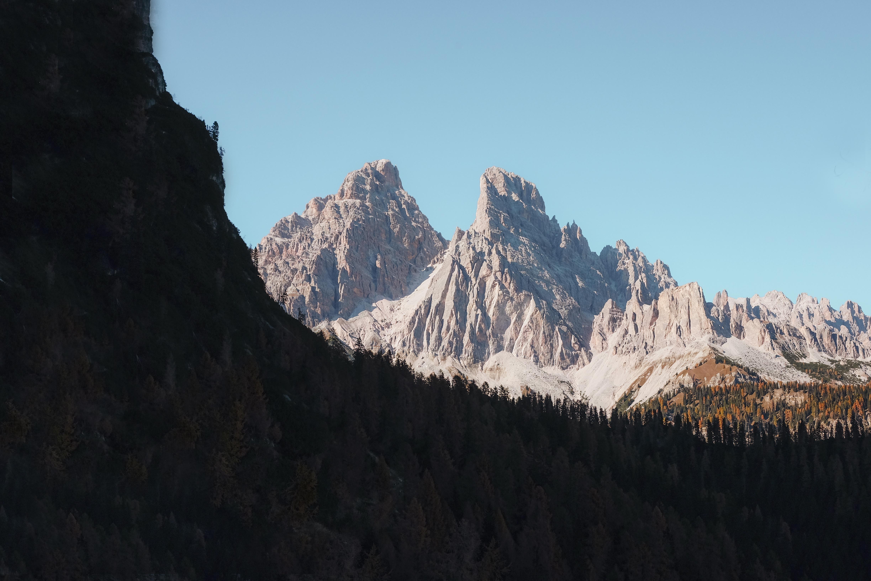 forest near gray stone mountain
