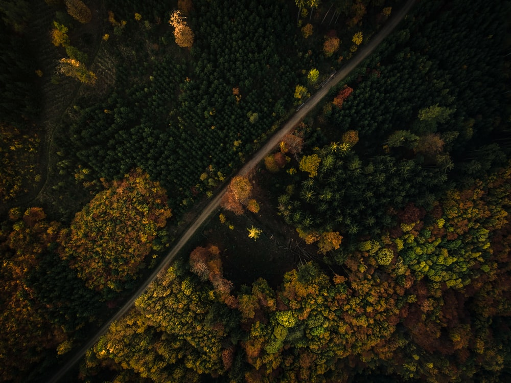 aerial photography of road in woods at daytime