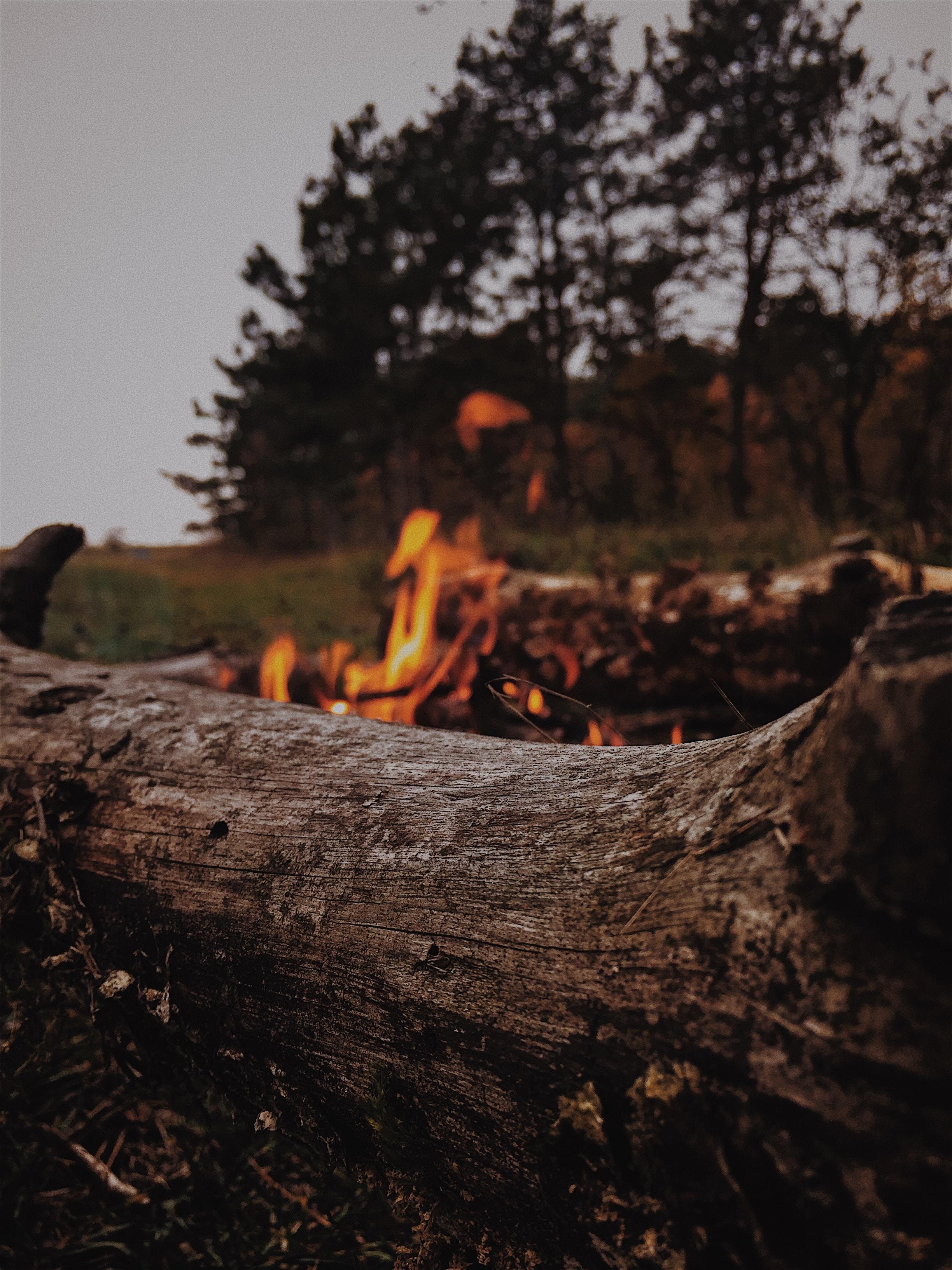 brown wooden log near bonfire