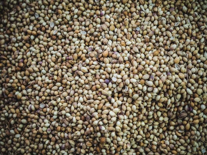 brown beans