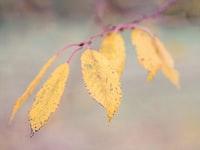 macro photography of brown elaves