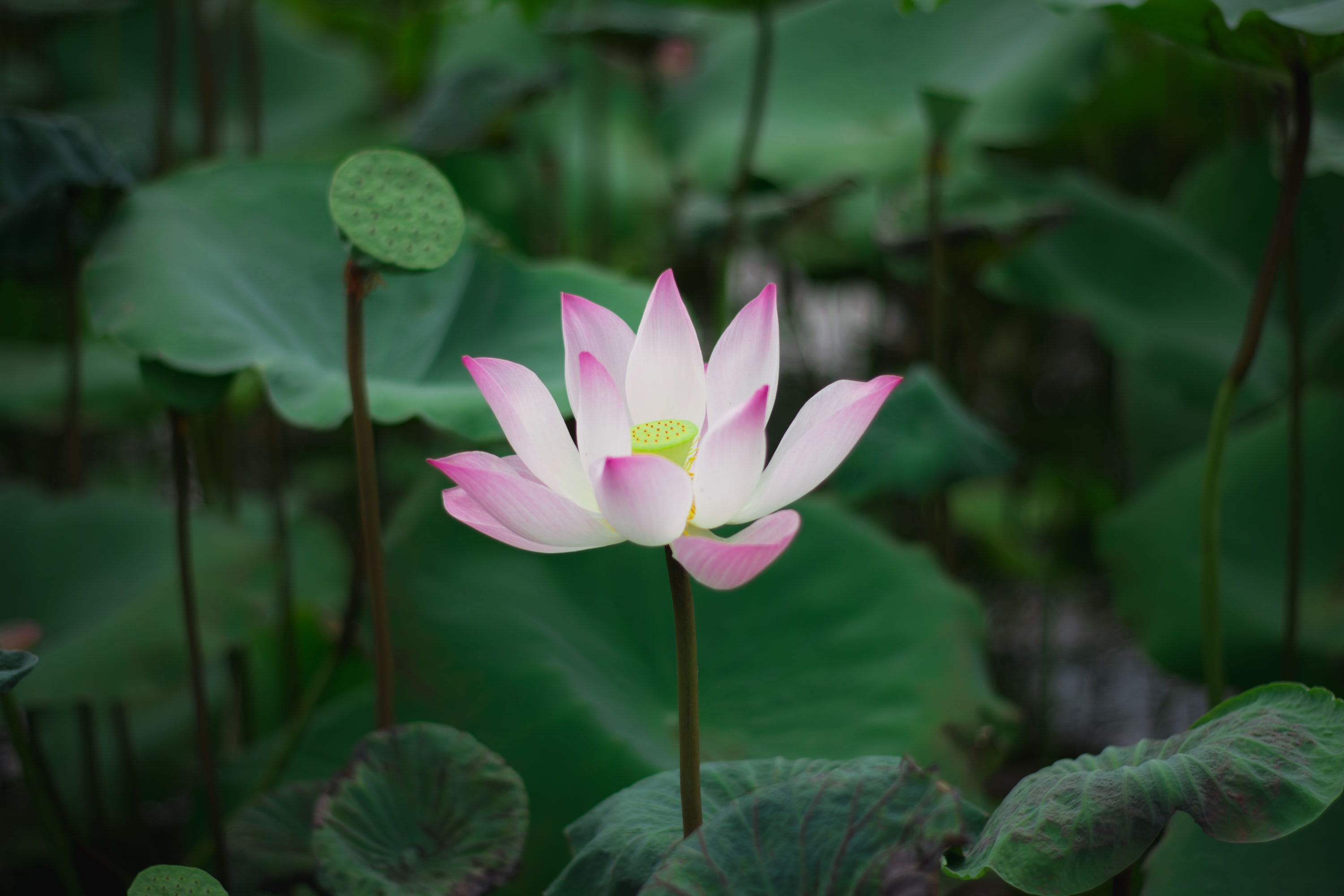 shallow focus photo of pink-and-white petaled flower