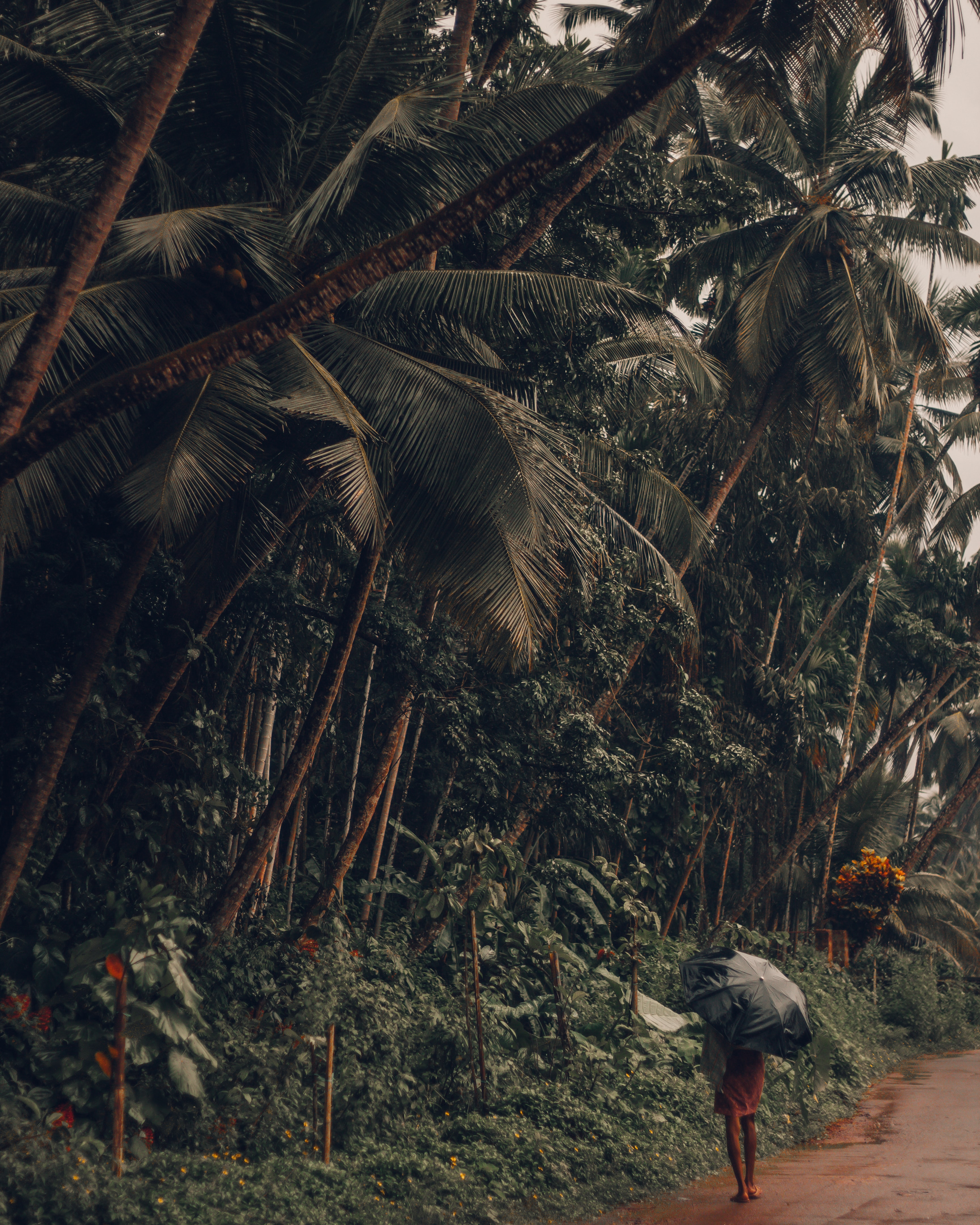 person walking beside coconut trees during rainy day