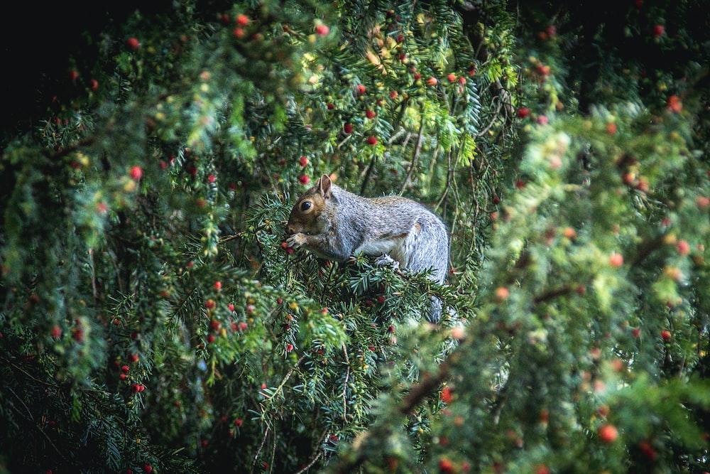 squirrel eating fruits during daytime