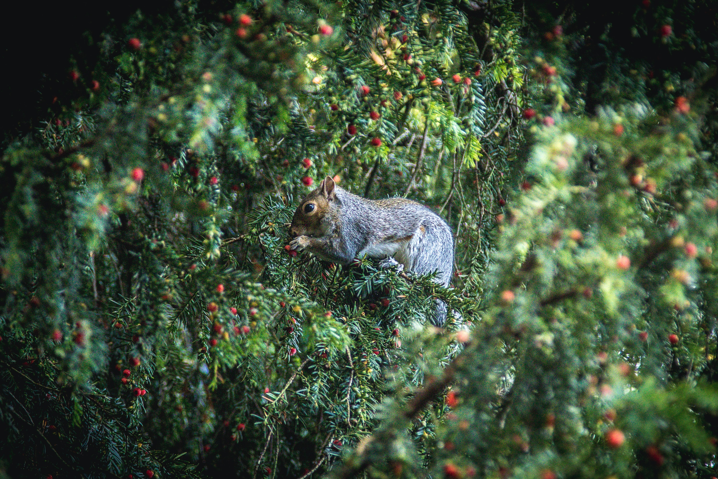 squirrel eating fruits during daytime