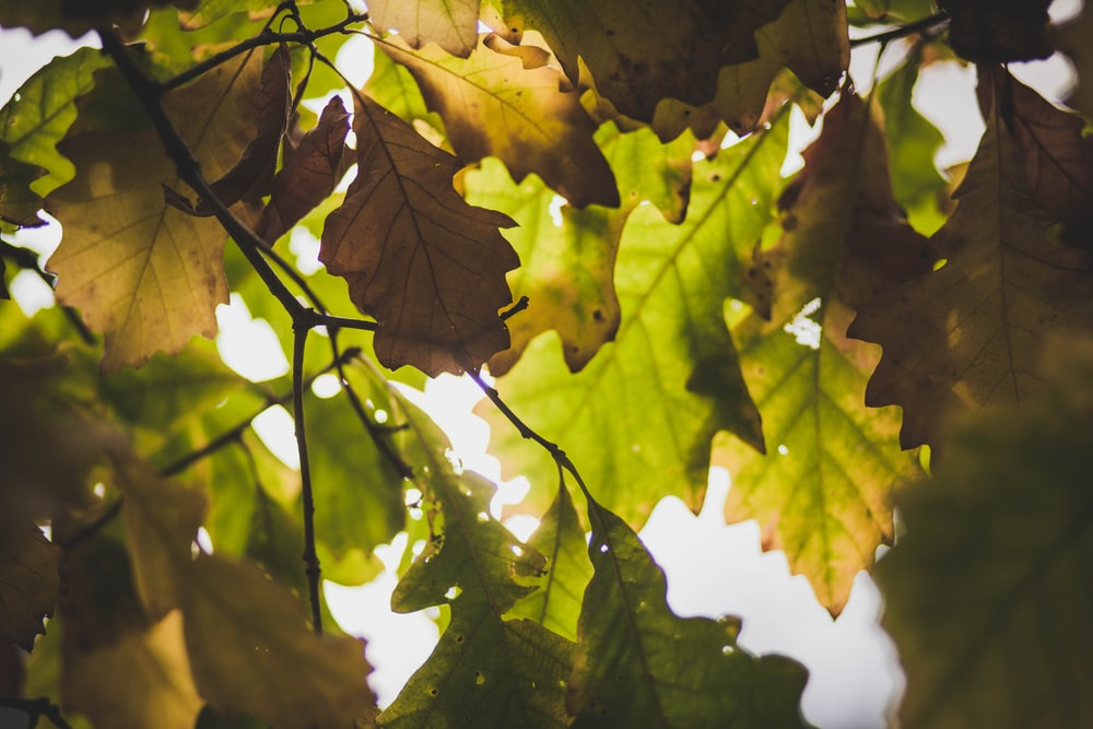 shallow focus photography of green and brown leaves