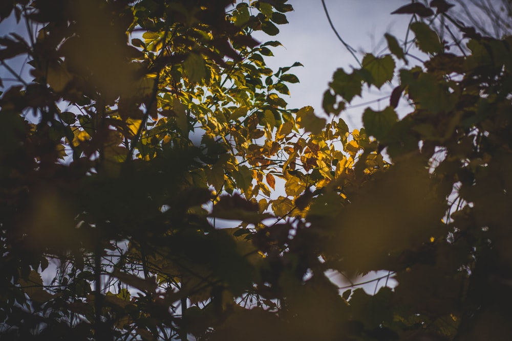 low angle photography of green leafed trees
