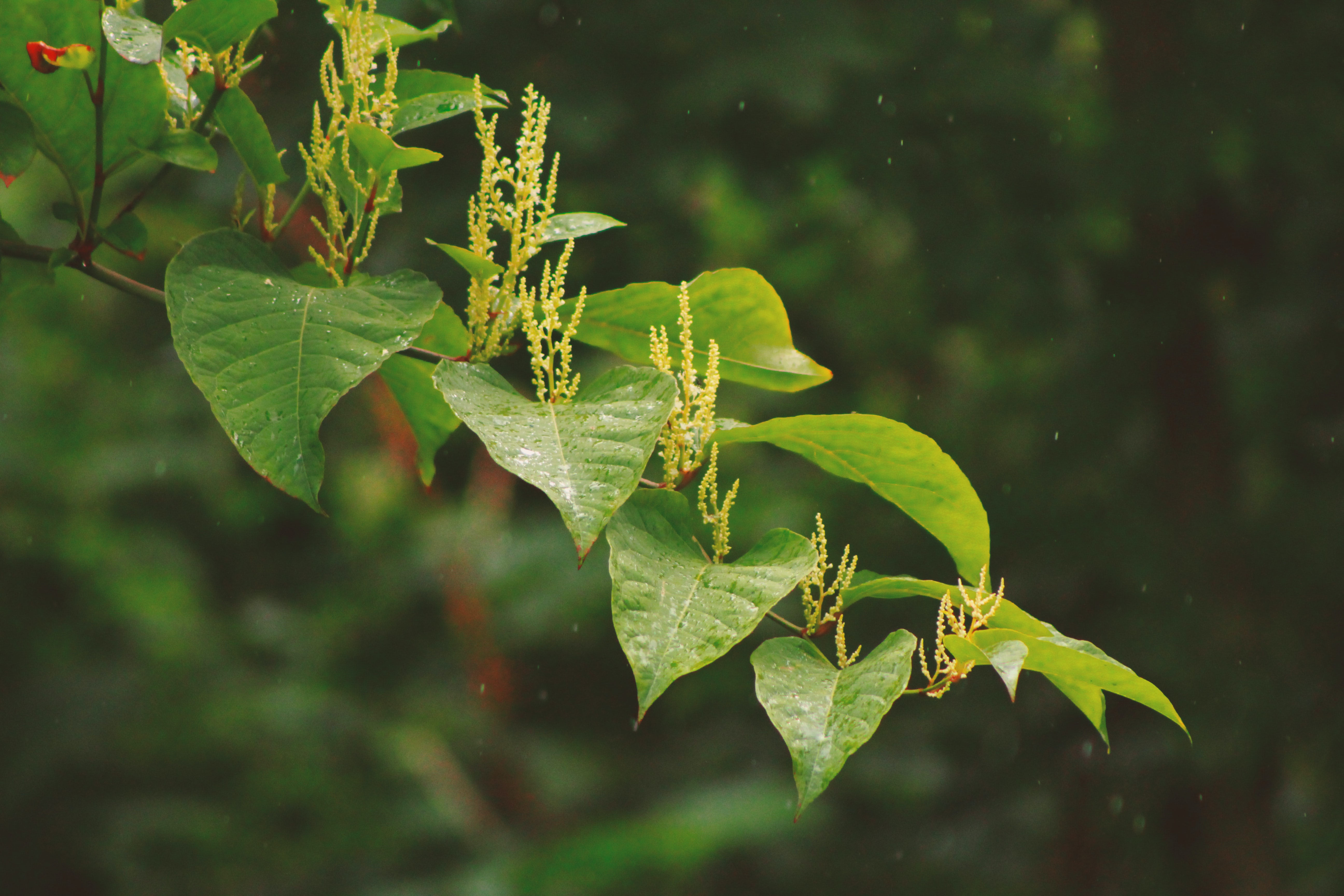 selective focus photography of green leafed plant at daytime