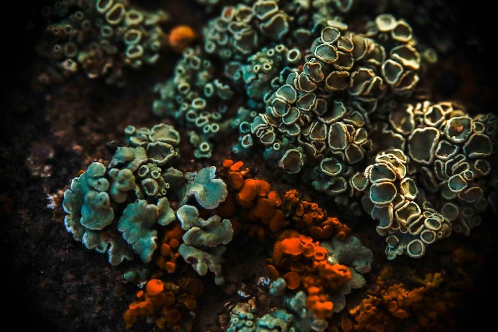 green and orange corals