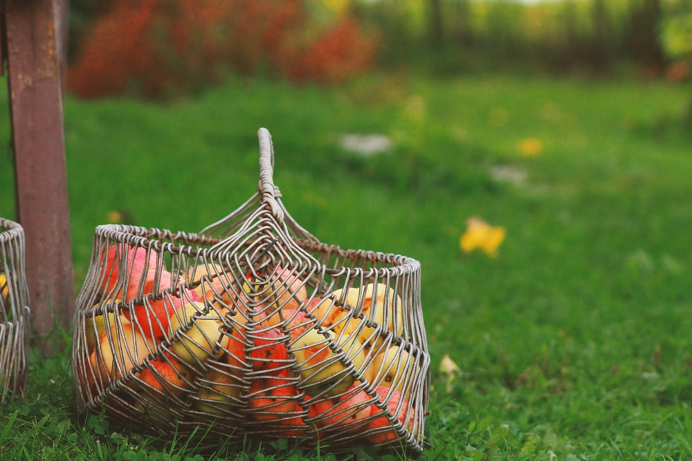 shallow focus photography of brown wicker basket and green grass