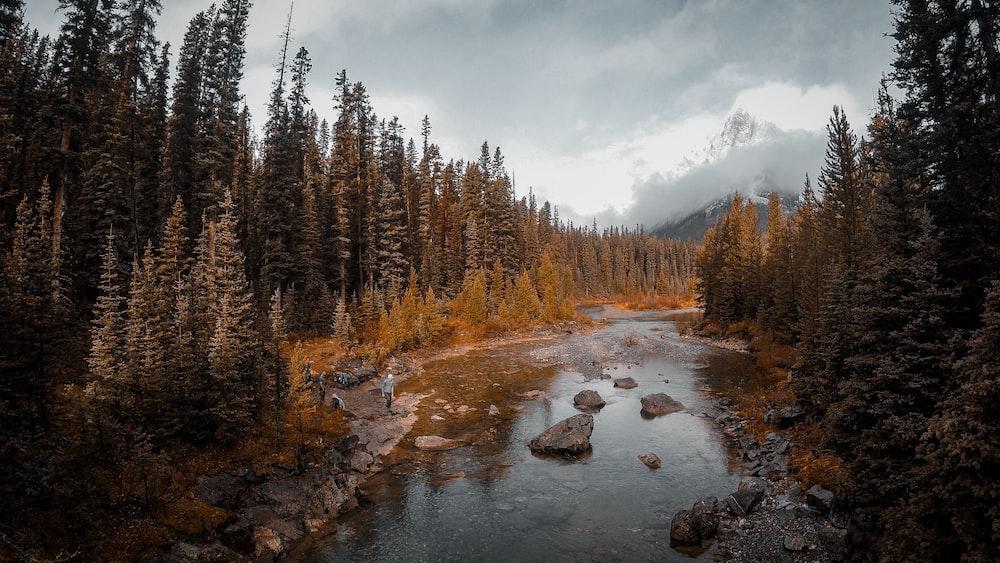 photo of body of water in between trees