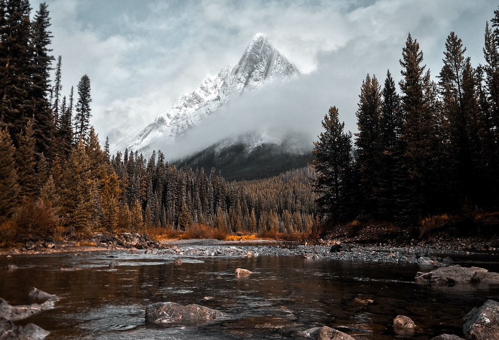 river surrounded with tall trees and mountain alp at distance