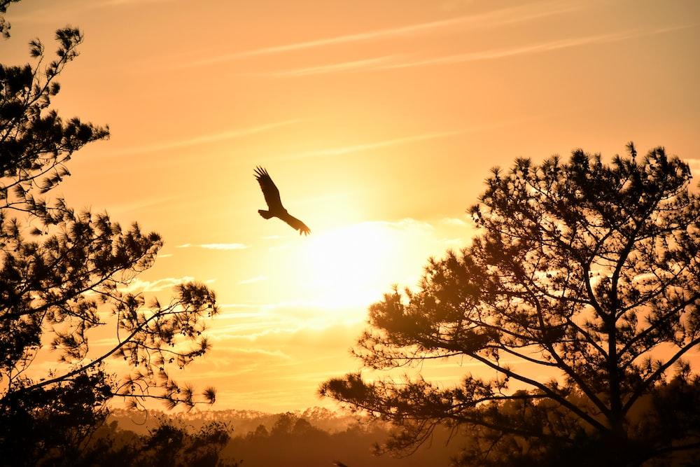 eagle hanging under sunset