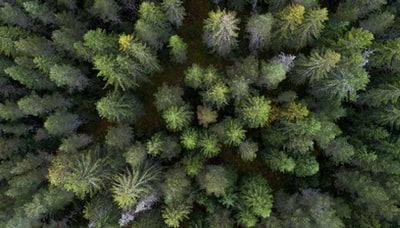 aerial photo of trees above zoom background