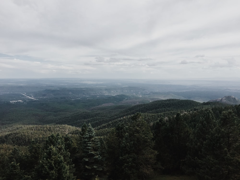 bird's eye view of forest mountain