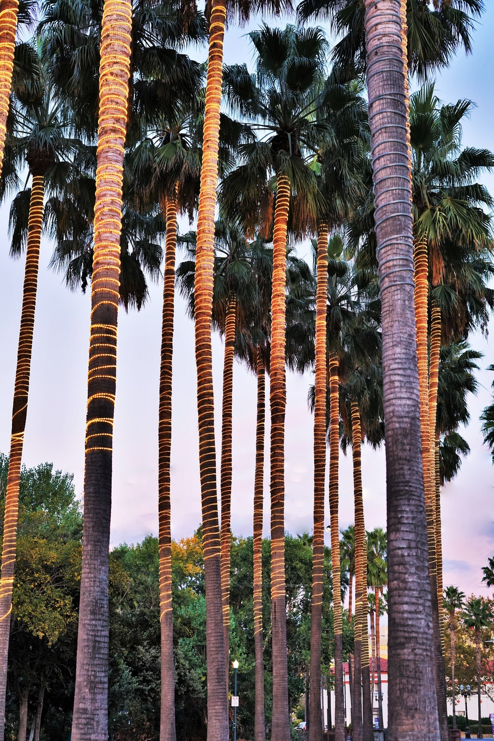 lineup of tropical trees