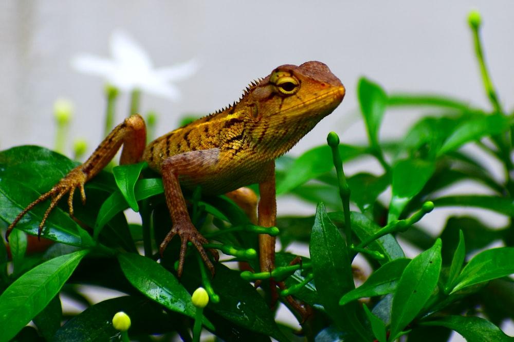 brown frog on leaves