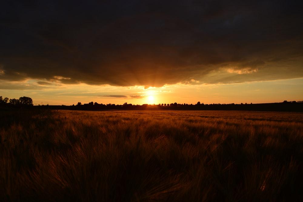 open field under black clouds during golden hour