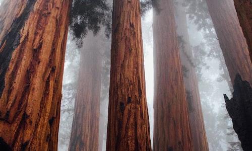 tree pickup line