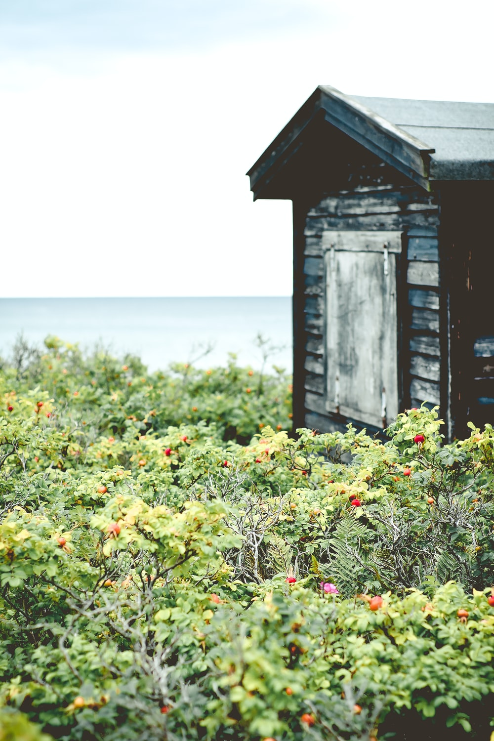 shallow focus photography of green plants with flowers near a wooden house