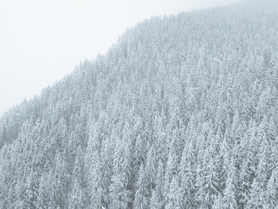 snowy forest on mountainside during daytime chilly zoom background
