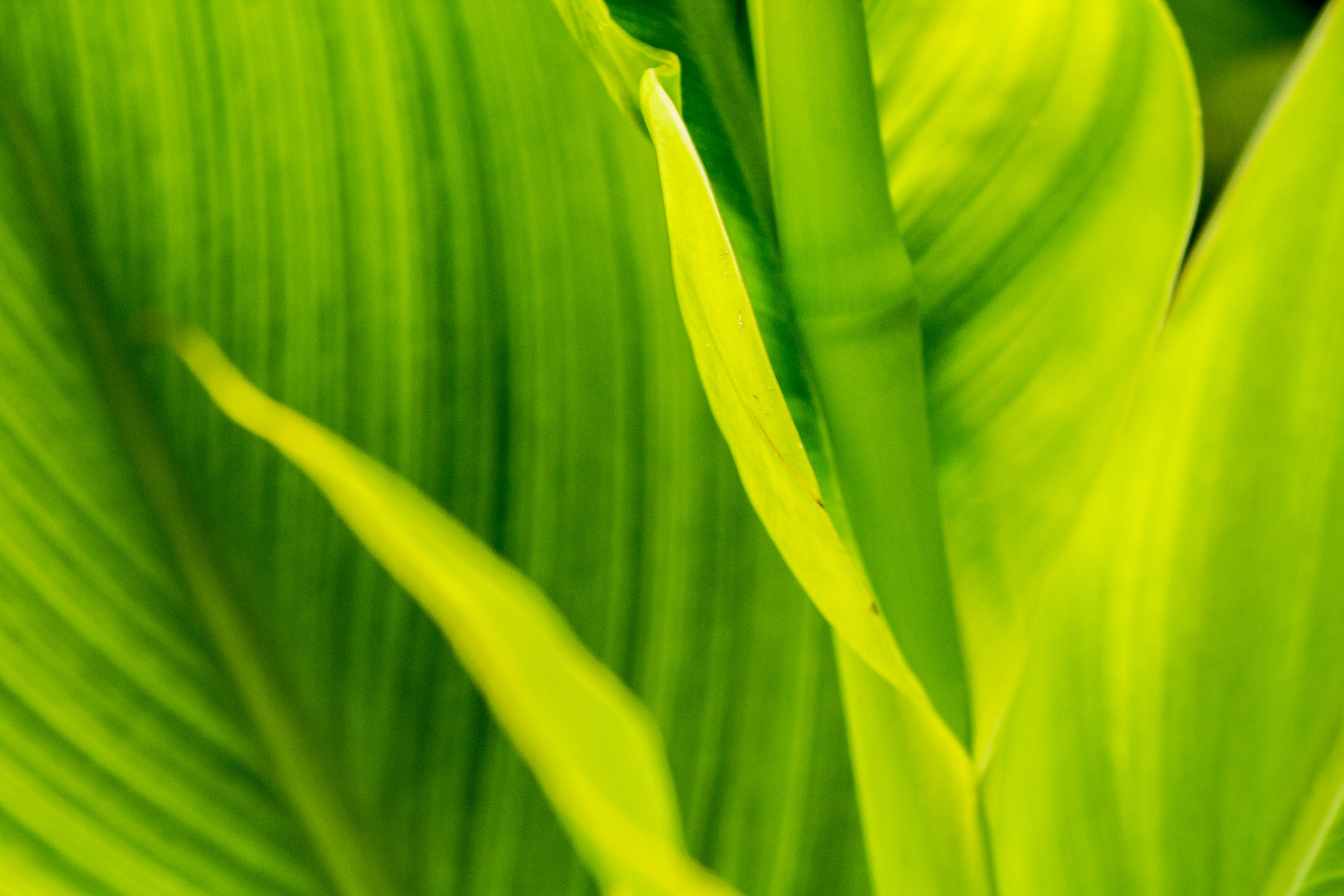 green and yellow wide-leafed plant at daytime