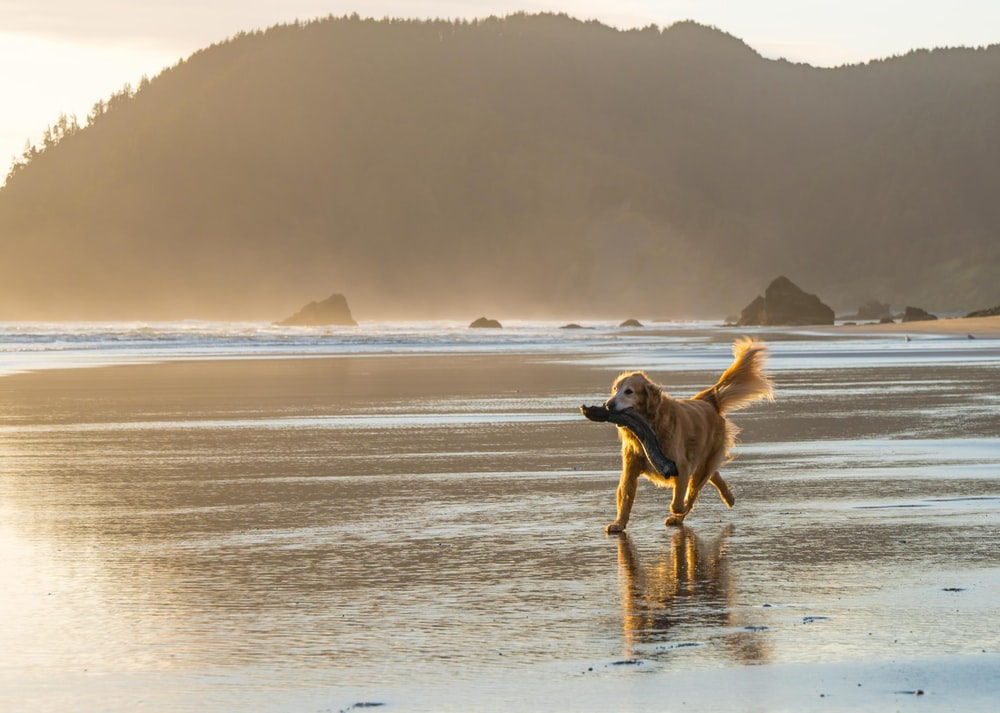 brown dog walk on seashore