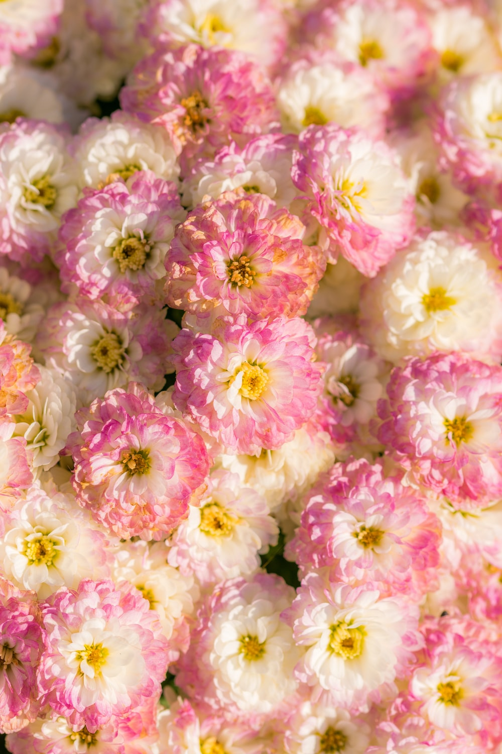 white-and-pink petaled flower lot