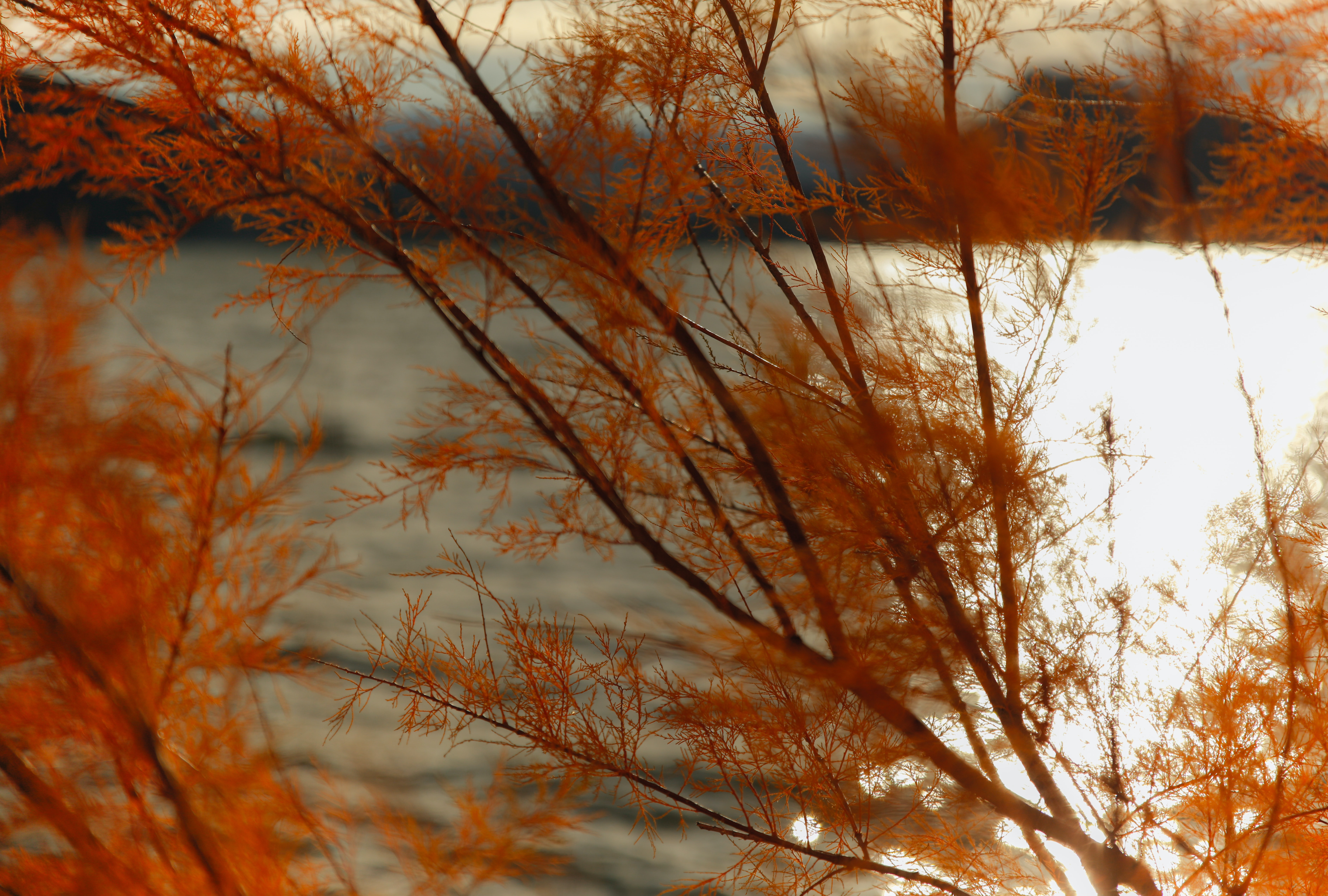 orange leaved tree next to body of water