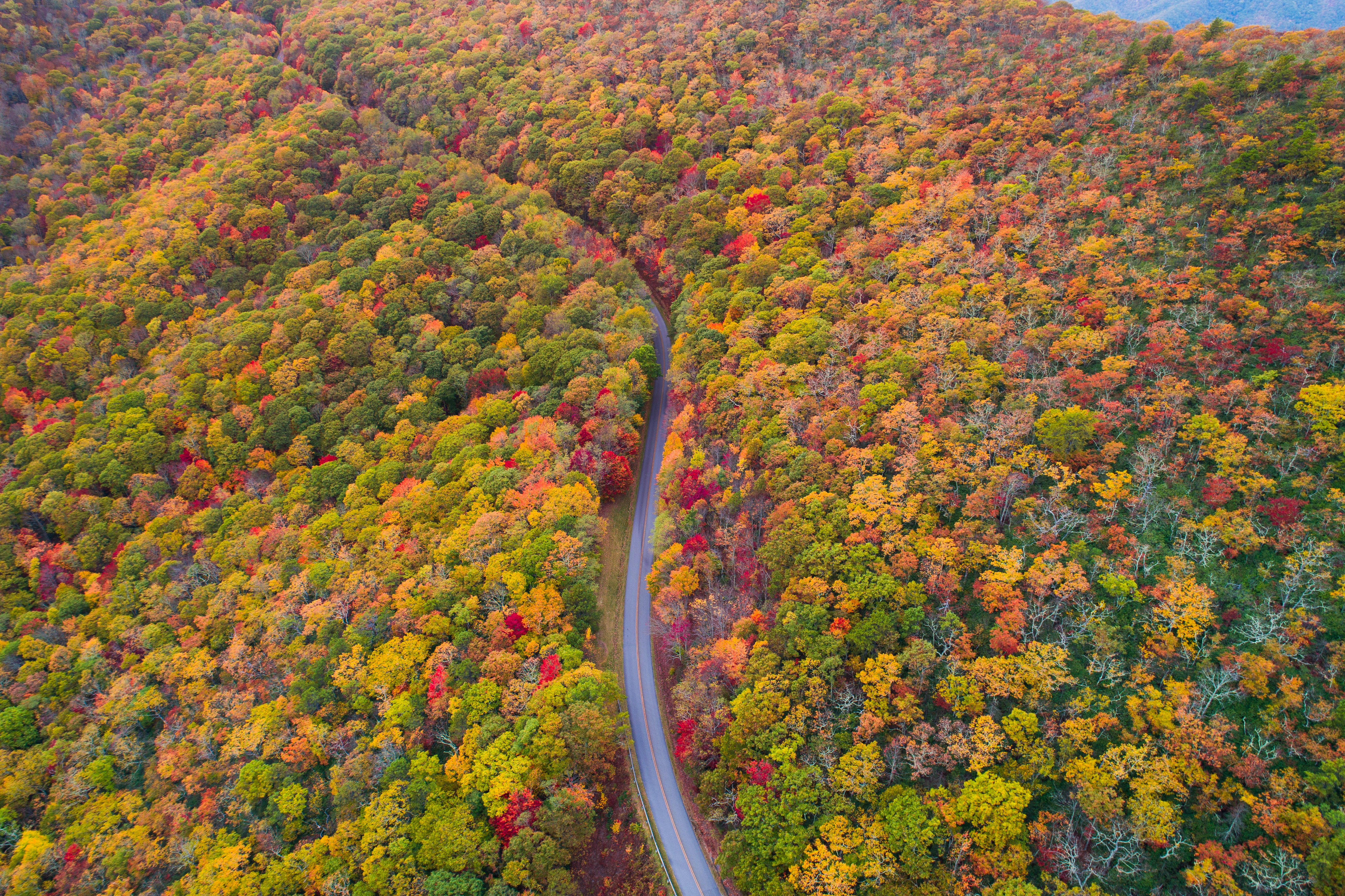 aerial photo of green, red, and yellow leafed trees at daytime