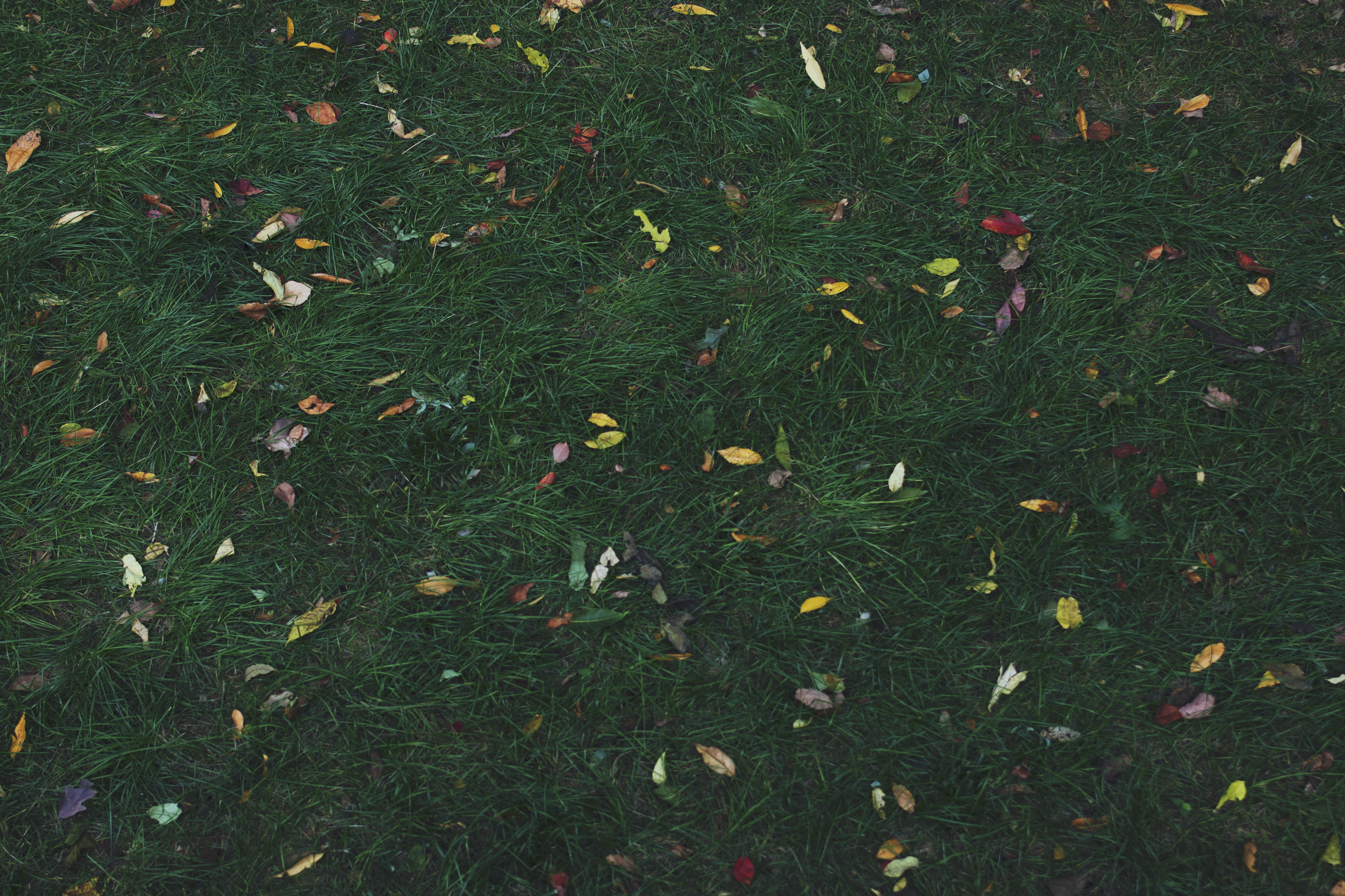 assorted-color leaves on green grass at daytime